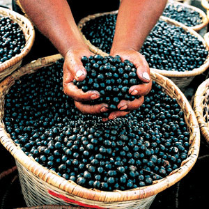 Post image for Is the Acai berry Diet for Real?