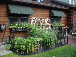 Post image for Vegetable gardens a great way to eat healthy, save money