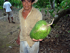 Post image for Guanabana – The delicious, healthy, weird looking fruit.