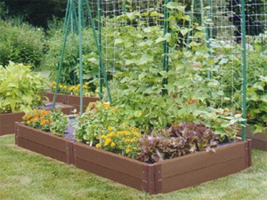 Growing your own food small vegetable garden ideas for Food garden ideas