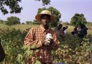 Post image for Booming Cotton No Boon to African Farmers