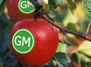 Post image for Europe paves way for GM crop bans