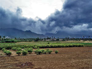 Post image for Rain slows, but no major impact on sowing of crops