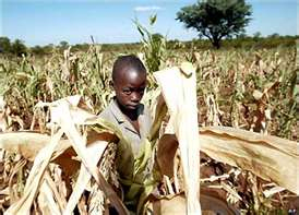 Post image for Breaking the Cycle of Food Shortages in Africa With Fertilizer and Technology