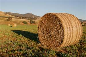 Post image for Can you spare a bale?