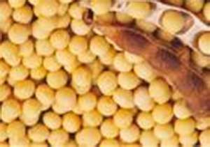 Post image for APNewsBreak: Monsanto seeks OK for low-fat soybean