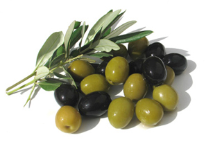 Post image for Master Gardeners: Marin's Mediterranean climate ideal for growing olives
