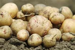 Post image for Washington State Potato Growers Vote To Continue Marketing Order